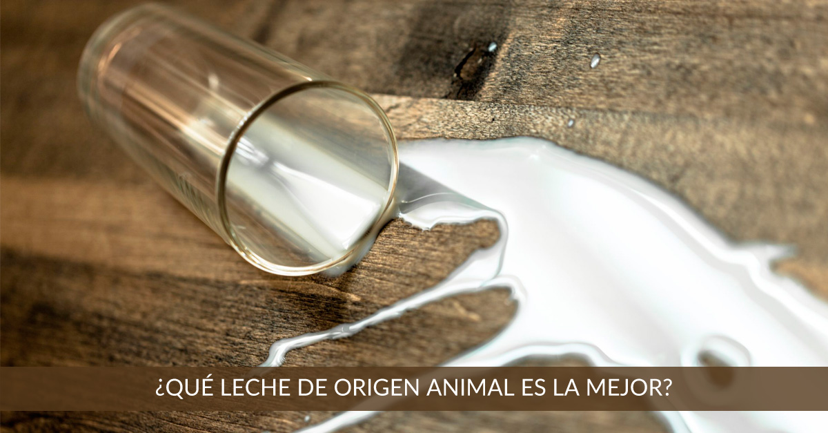 que leche de origen animal es mejor