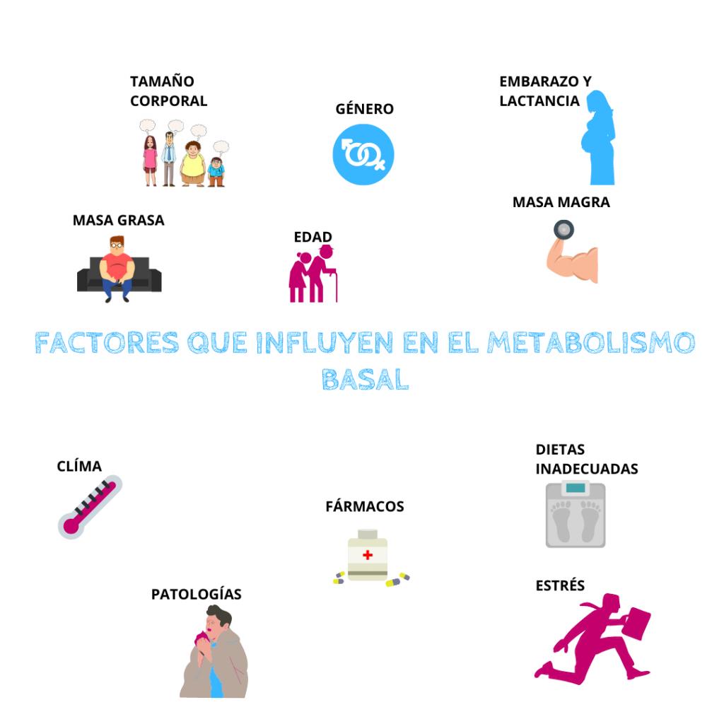 Qué es el metabolismo y cómo nos afecta - ICONICA..