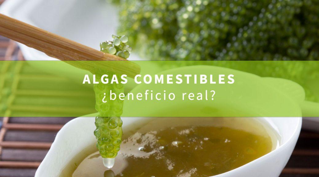 algas-como-alimento-beneficiosas-o-perjudiciales